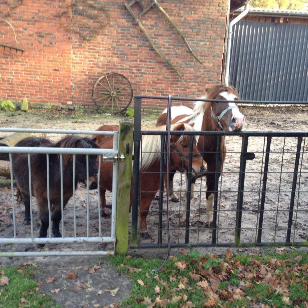 Ostbevern Touristik e.V. - Hof Ponys