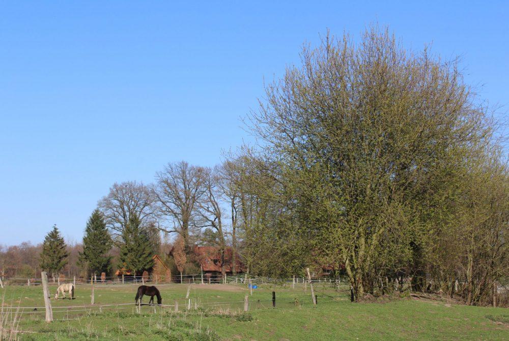 Ostbevern Touristik e.V. - Pferde auf der Weide im Schirl